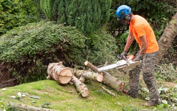 additional services offered by Windsor tree surgeons