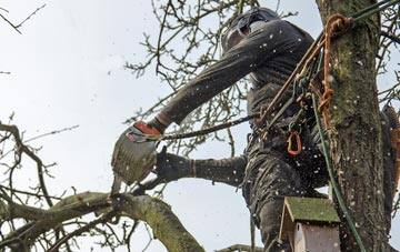 the process of removing dead wood from Windsor trees