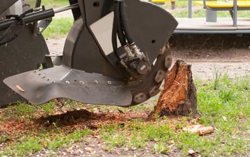 professional Windsor stump grinding services