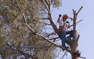 reasons to consider Windsor tree surgery