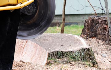 tree stump grinding Windsor