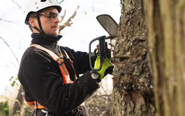 Windsor tree surgery costs