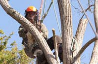 Windsor tree dead wooding services