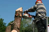 Windsor felling services