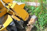 Windsor tree stump grinding services