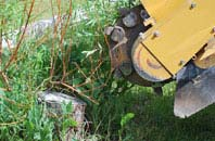 free Windsor tree stump grinding quotes