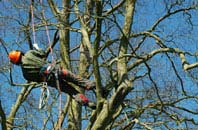 Windsor tree surgery services