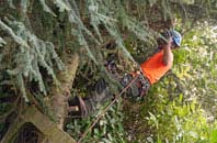 free Windsor tree surgery quotes